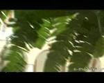 WoCradsKVB4BIDNfpnAZ_160x120